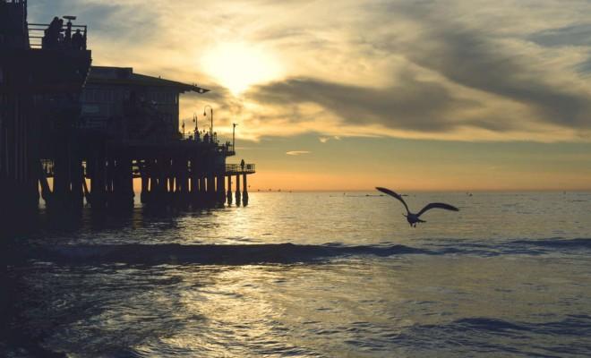 sea-sunset-bird-flying