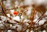 snow-nature-bush-winter